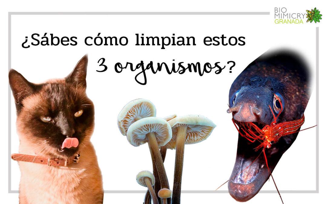 ¿Sabes cómo limpian estos 3 organismos?