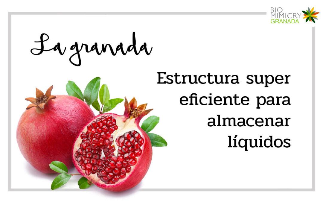 La granada: fruta con estructura para almacenar líquidos super eficiente